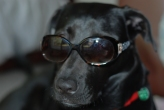 Wearing a stylus pair of sunglasses