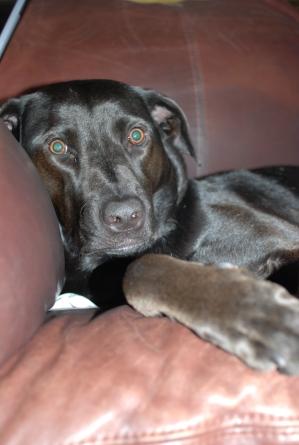 Once a black dog....