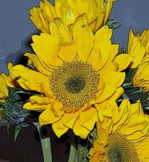 Sunflowers Van Goh Style